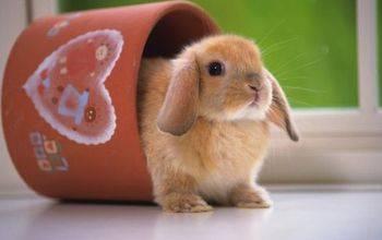Вислоухий кролик — 14 пород карликовых декоративных с короткими ушами