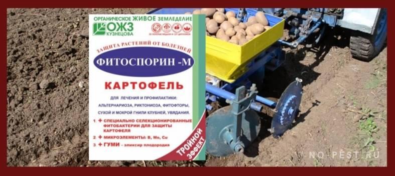 Яровизация картофеля перед посадкой в домашних условиях