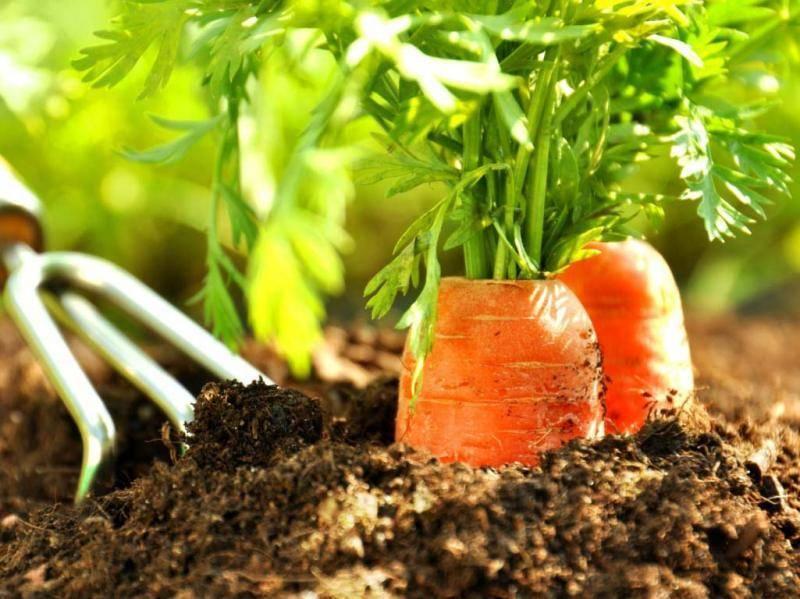 После чего можно сажать лук под зиму, чтобы не остаться без урожая
