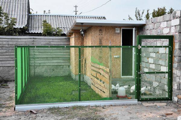 Индюки: разведение, содержание, уход в домашних условиях