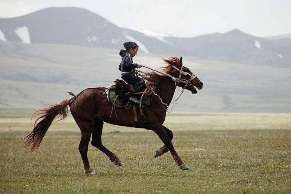 Особенности строения лошади