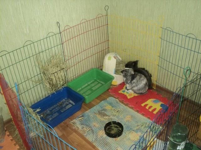 Содержание кроликов в вольер и изготовление своими руками