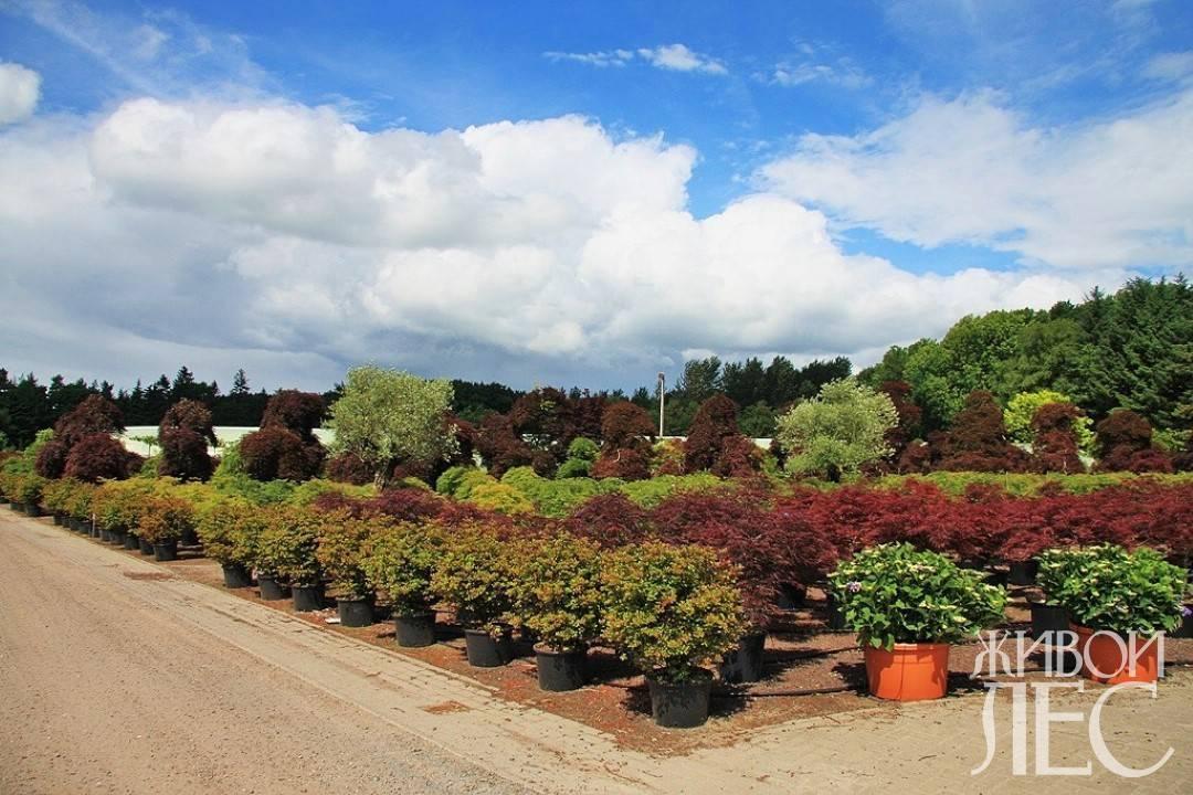 Посадка деревьев и кустарников на участке нормативы