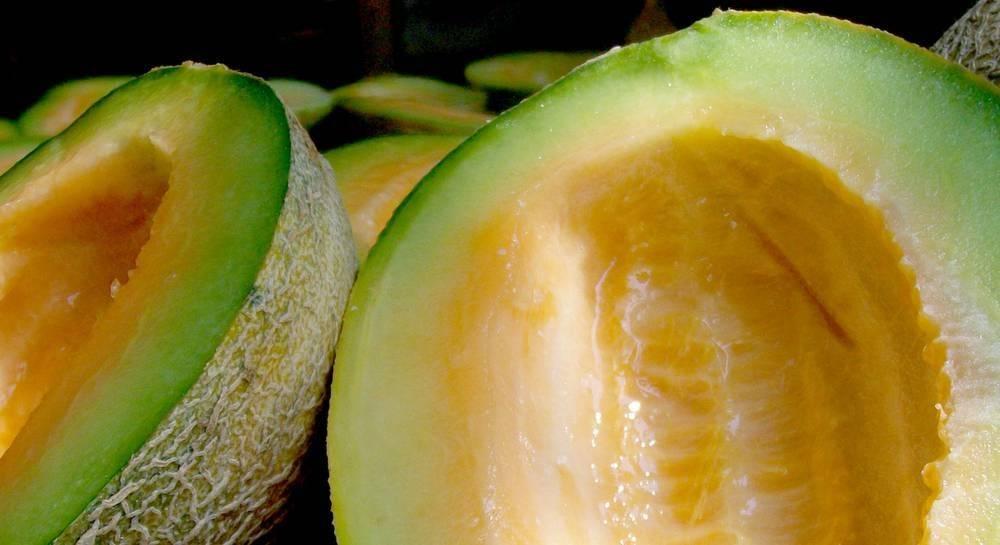 Сорт дыни славия: описание, агротехника выращивания и уход