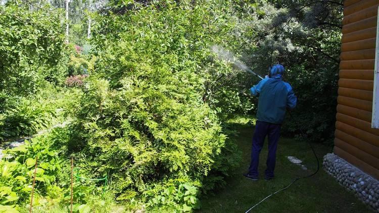Обработка сада весной от болезней и вредителей – гарантия хорошего роста, развития и плодоношения деревьев и кустарников | (фото & видео) +отзывы