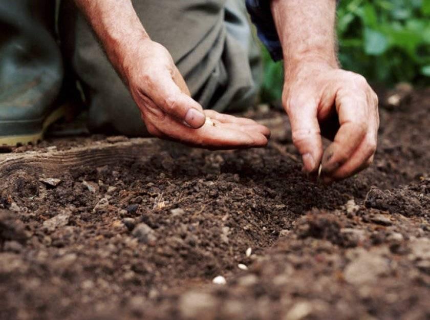 Рассада огурцов дома и на даче — когда можно сажать и какая должна быть земля? посадка огурцов семенами в открытый грунт