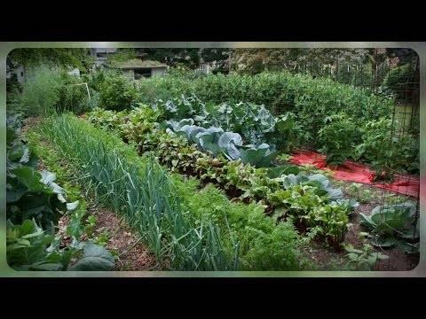 Что после чего сажать на огороде. грамотно планируем