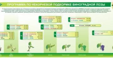 Подкормка винограда весной минеральными удобрениями и народными средствами