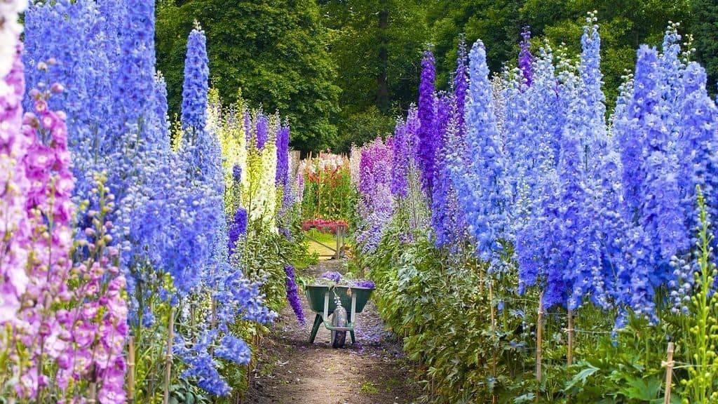 Полезные свойства борца (аконита)и показания к применению растения