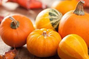 Описание сортов декоративной тыквы, ее выращивание и применение