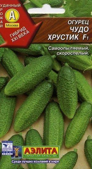 Чудо хрустик f1 – гибридный огурец. как выглядит, положительные и отрицательные свойства, выращивание