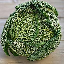 Савойская капуста - сорта, посадка, выращивание, фото | россельхоз.рф