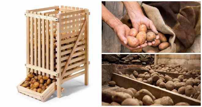 Как хранить картофель, какую температуру он выдерживает, хранение в домашних условиях