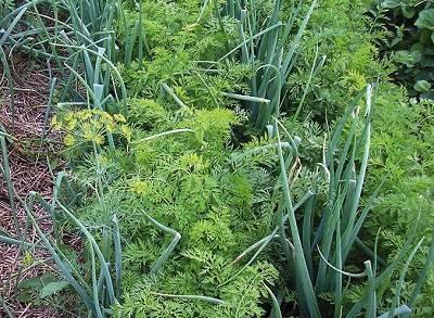 10 пар растений, которые нужно сажать рядом