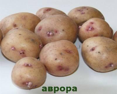 Биологические особенности картофеля, технология его возделывания