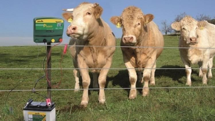 Об электропастухе для коров, крс: сколько стоит, как сделать своими руками