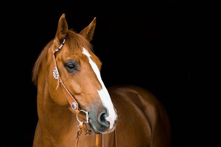 Идентификация лошадей ч.2