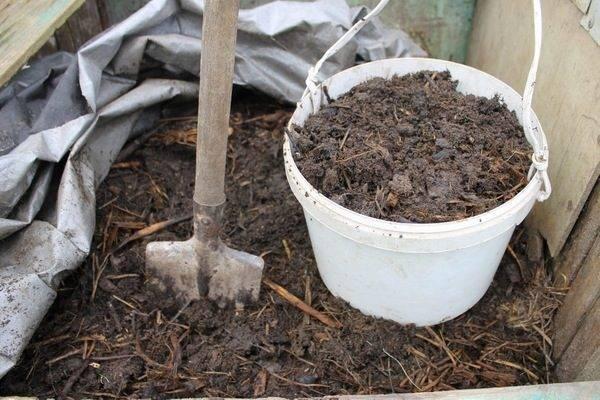 Любимые методы чем удобрять огурцы в теплице