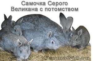 Чем кормить кроликов чтобы они набирали вес