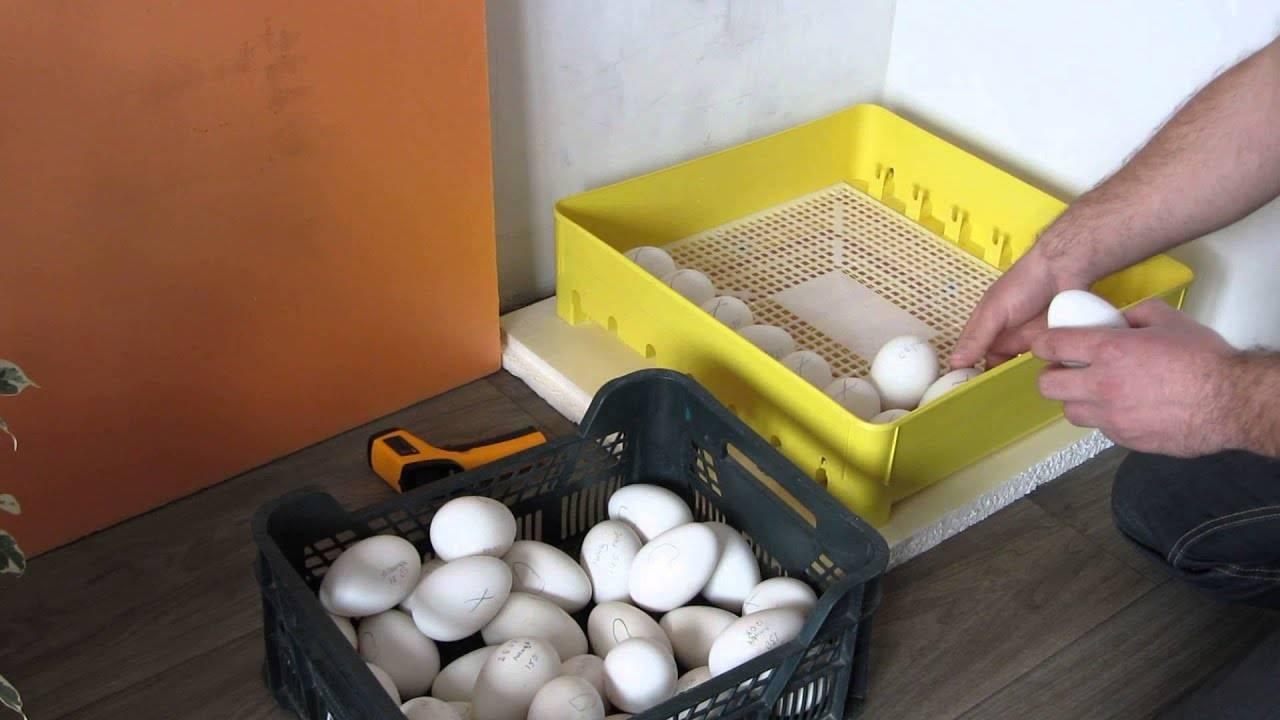 Инкубатор для яиц описание