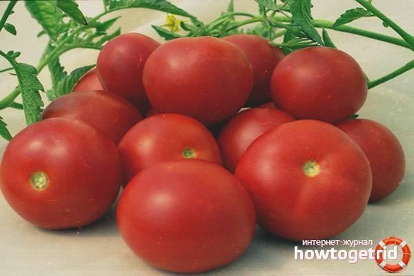 Томат катя f1: отзывы, фото, урожайность, описание и характеристика   tomatland.ru