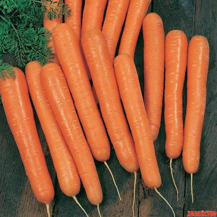 Семена моркови лучшие сорта для открытого грунта - полный перечень разновидности семян