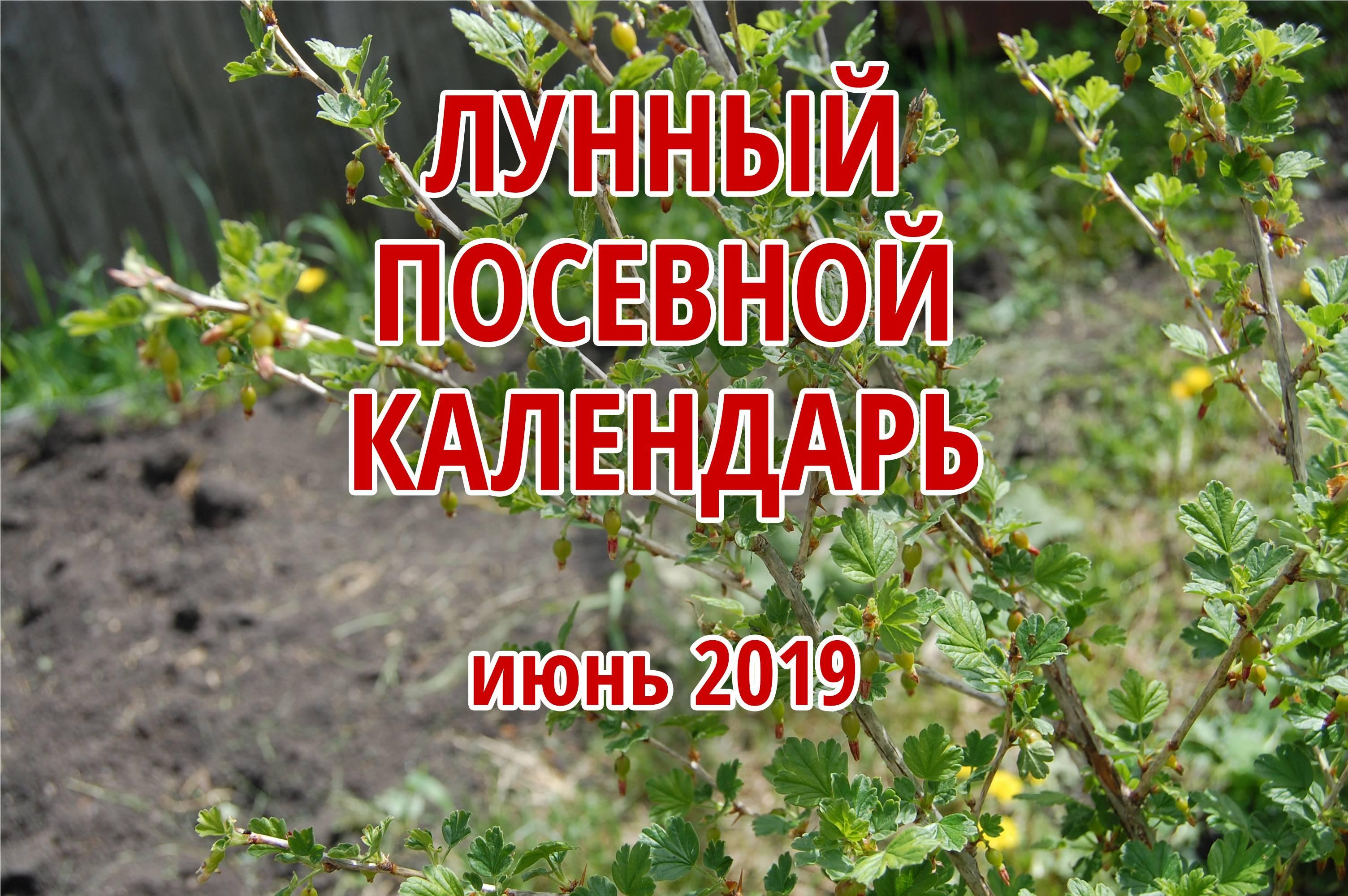 Посадка капусты в апреле 2019 на рассаду. высадка в открытый грунт по лунному календарю, благоприятные дни