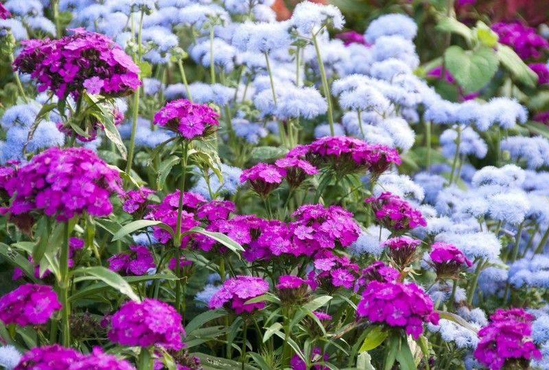 Лучшие удобрения для садовых и домашних цветов - энциклопедия цветов