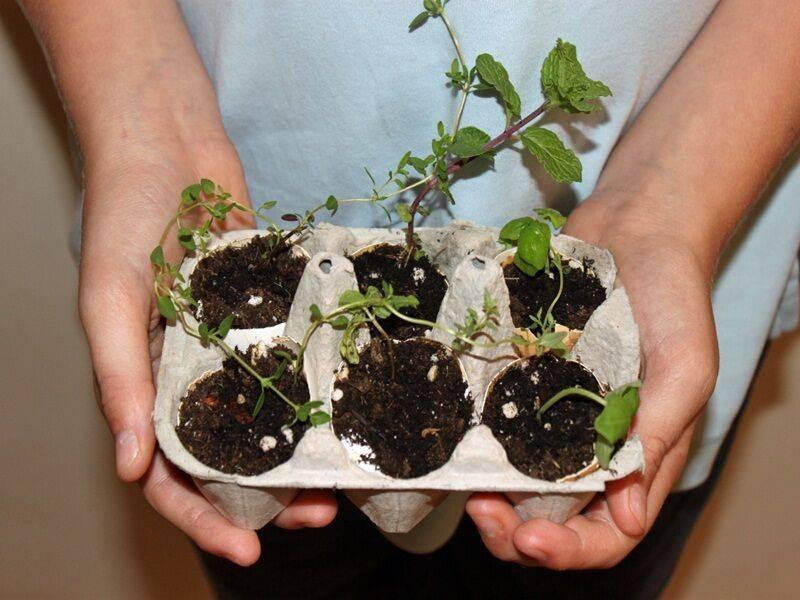 Редиска в яичных кассетах: когда уместно выращивание корнеплода таким способом, как подготовить лотки и провести посадку, как ухаживать за сеянцами?