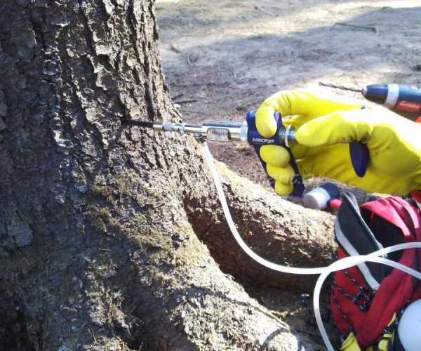 Как засушить дерево, химическое уничтожение деревьев — выкладываем все нюансы