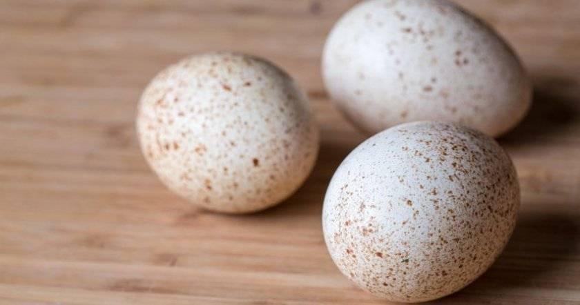 Высиживание индоуткой яиц: особенности процесса