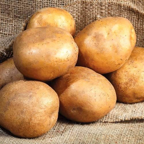 Сорт картофеля «киви»: характеристика, описание, урожайность, отзывы и фото