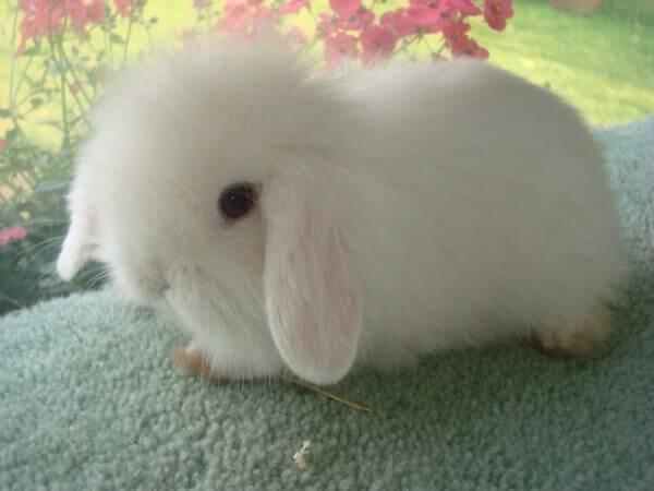 Продолжительность жизни обычных и декоративных кроликов