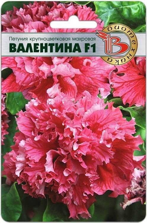 Петуния «валентина» (13 фото): описание сорта махровой крупноцветковой петунии