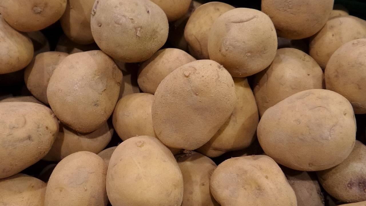 Как проращивают картофель для посадки: несложные методы и способы известные не всем