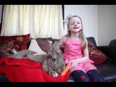 Породы кроликов великанов с фотографиями и названиями