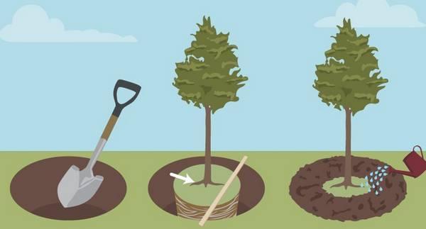 Яблоневый сад: как правильно распланировать посадки