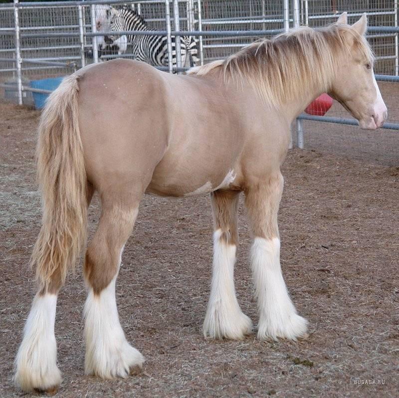 Самые красивые лошади (55 фото): какие прекрасные кони в мире, какая порода