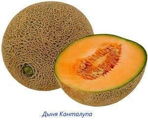 Мускусная дыня - cantaloupe