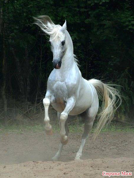 """Литература: о чём стихотворение """"лошади в океане"""" бориса слуцкого? лошади умеют плавать, но - не..."""