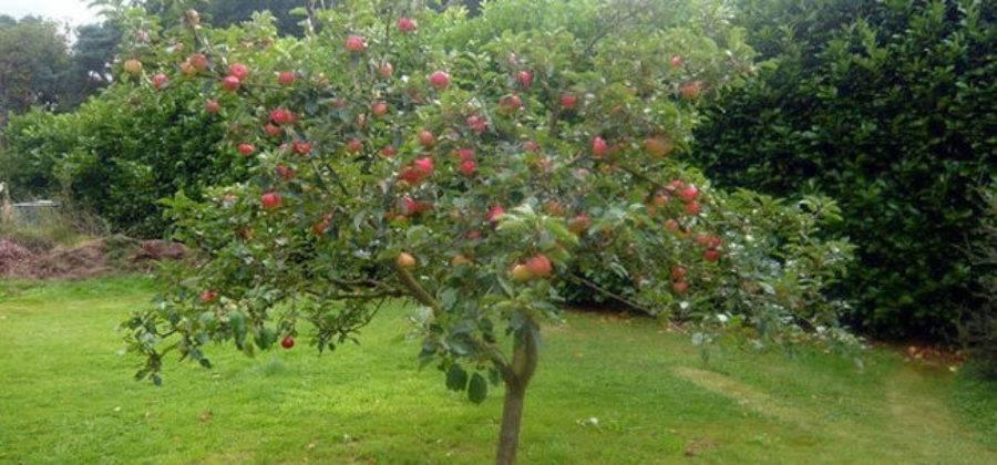 Плодожорка на яблоне: методы борьбы с червями, гусеницами, паутиной