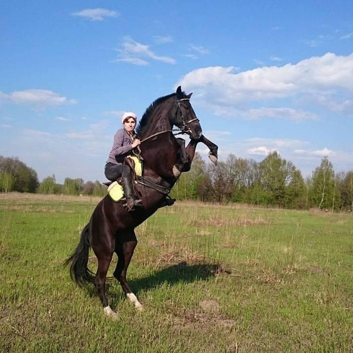 Сколько же лет могут жить лошади