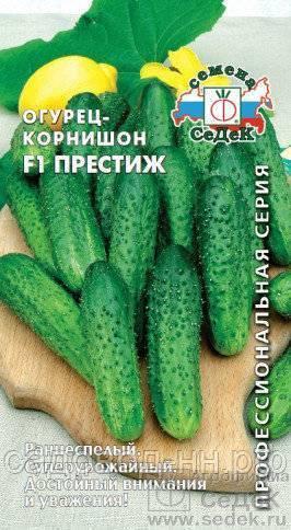 Огурец престиж f1: описание, достоинства, технология выращивания рассады, прямой посев семян, уход, отзывы