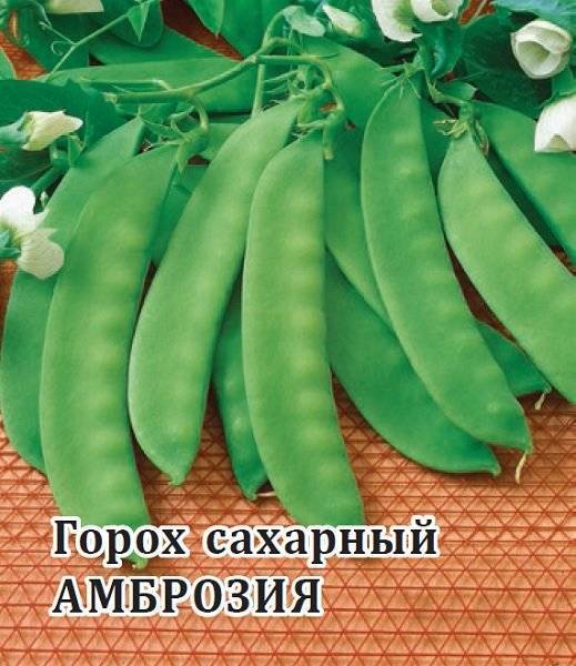Как вырастить бобы в открытом грунте: выбор сорта, особенности посадки и ухода