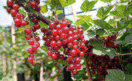 Овощи на грядке: список неприхотливых, теневыносливых и необычных. смешанные посадки овощей