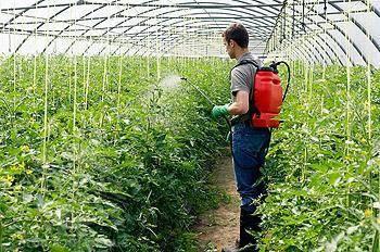 Раскрываем секреты: чем удобрять помидоры при посадке, чтобы они быстрее росли и обильнее плодоносили