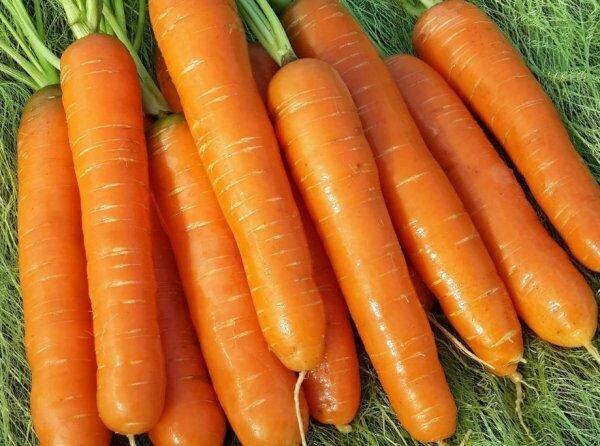 Морковь — какой сорт выбратьдля зимнего хранения
