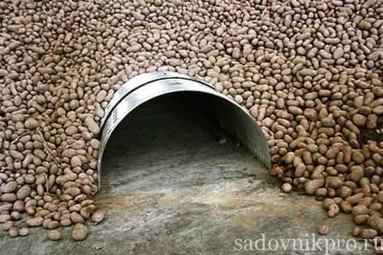 Секреты, как правильно хранить картошку на зиму в погребе и на балконе.