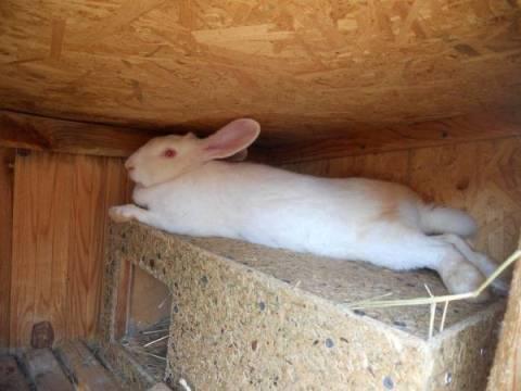 Клетки михайлова для кроликов — чертежи с размерами и схема для уличного содержания