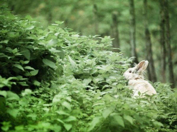 Трава для кроликов: какой можно кормить, а какую давать нельзя
